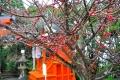 宝塚神社9