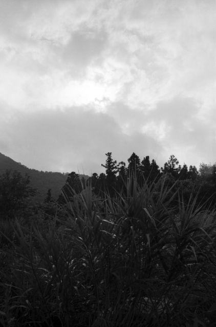 深山幽谷83b