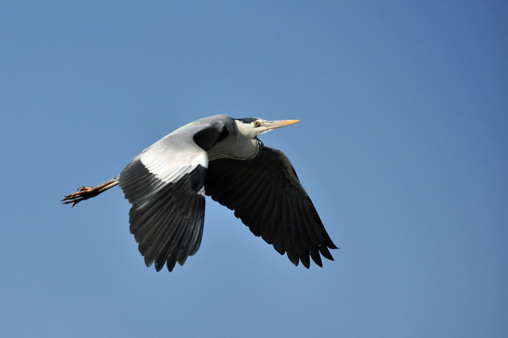 飛ぶ鳥後を