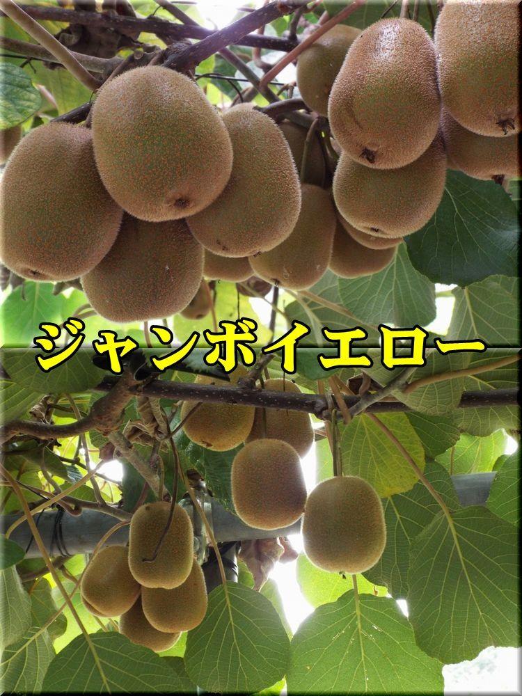 1JY150814_013.jpg
