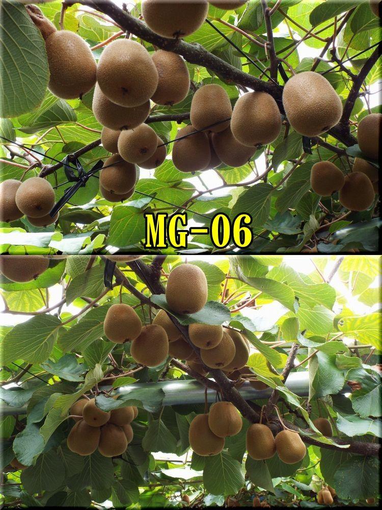 1MG150814_010.jpg