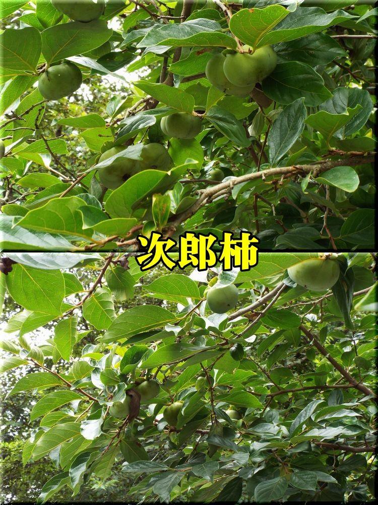 1jirou150825_004.jpg
