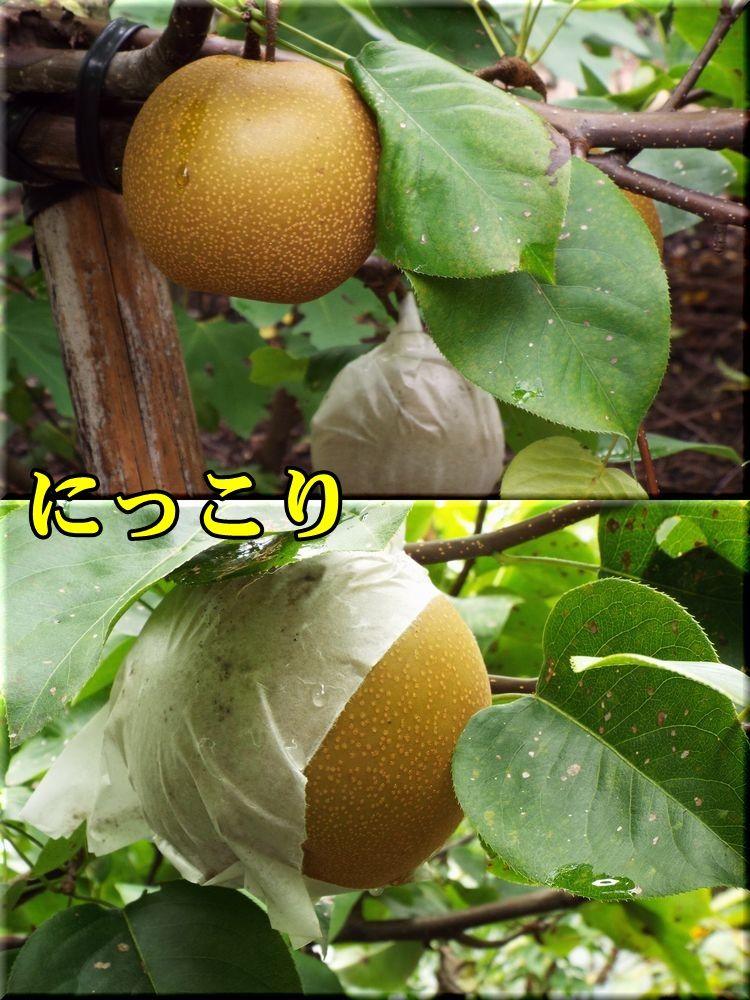 1nikori150824_008.jpg