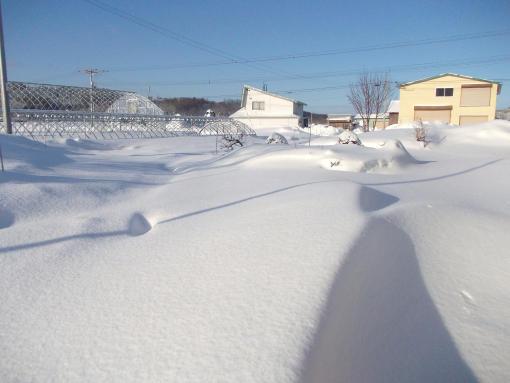 20150228_積雪50cm_1