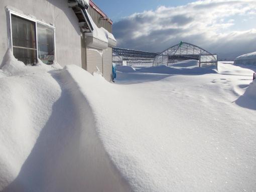 20150228_積雪50cm_2