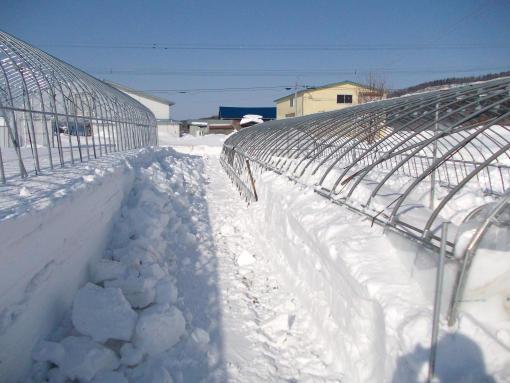 20150306_除雪再開
