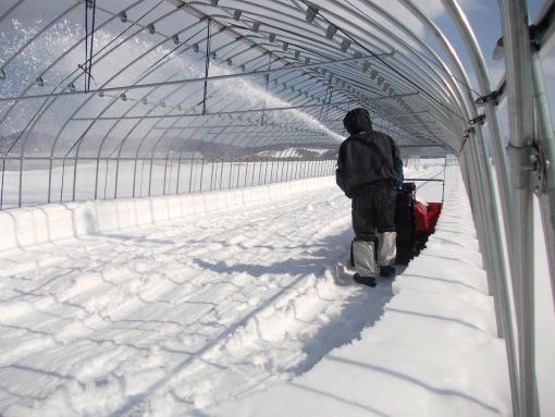20150308_8番ハウス除雪中。