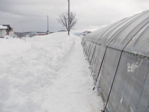 20150313_人力除雪後