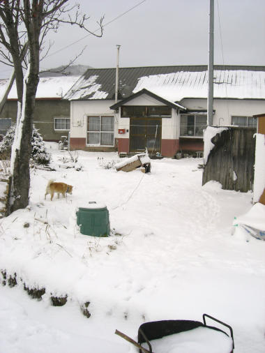 20091203_雪の中の大ちゃん