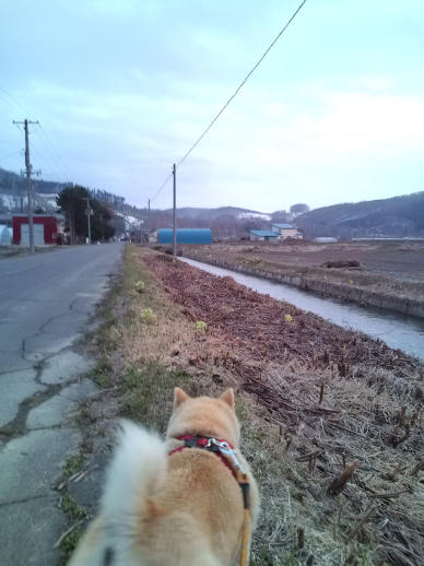 20100501_お散歩中
