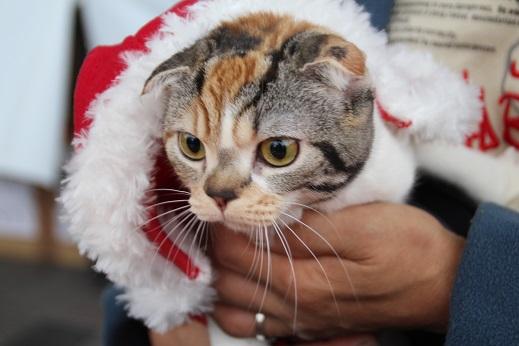 クリスマスマーケット 2014-12-20-5