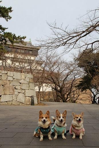 八坂神社 2015-1-5-1