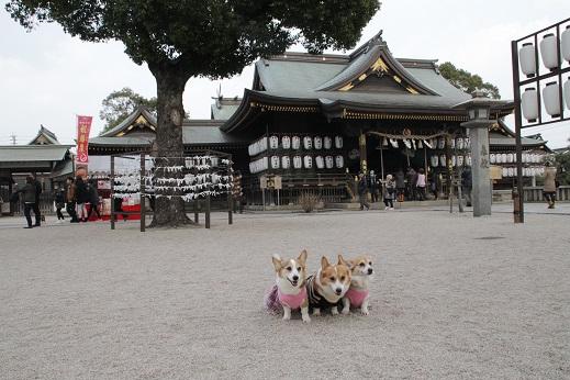 蛭子神社 2015-1-11-4
