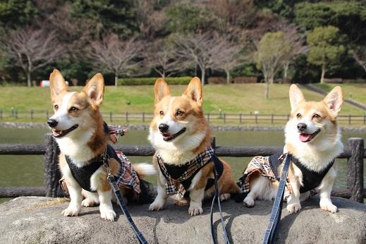 中央公園1 2015-1-25-2