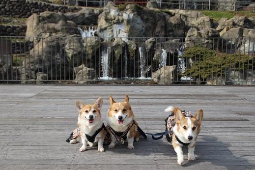 中央公園1 2015-1-25-4