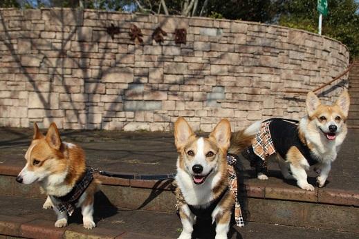 中央公園2 201501-25-7