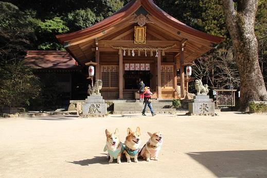 かまど神社 2015-2-1-6