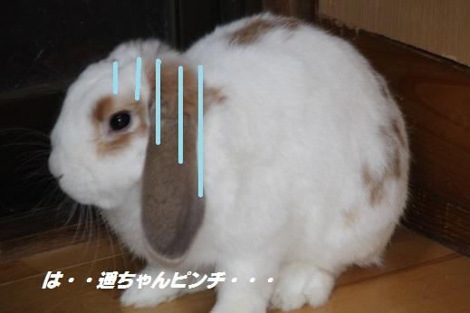 遥ちゃん鍋 2015-2-8-1