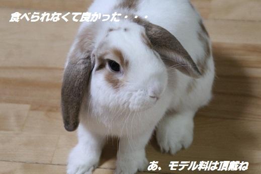 遥ちゃん鍋 2015-2-8-7