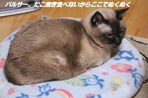 たこぱ 2015-2-15-8