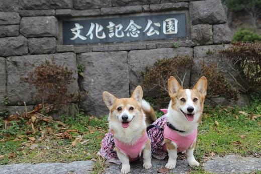 文化記念公園 2015-2-21-1