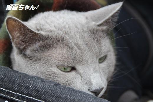 かしいかえん1 2015-3-15-7