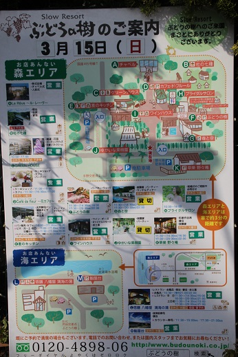 ぶどうの樹1 2015-3-15-4