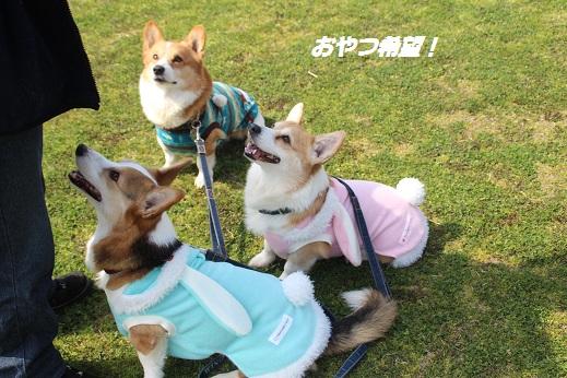 勝山公園1 2015-3-16-4