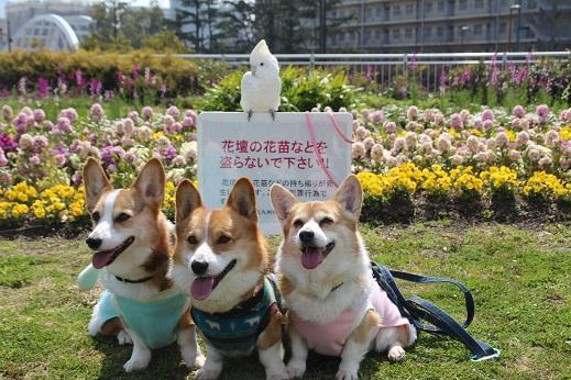 勝山公園1 2015-3-16-6