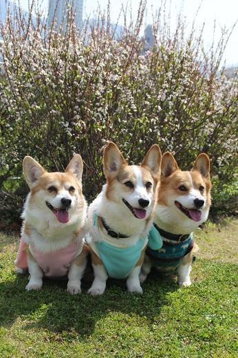 勝山公園1 2015-3-16-8