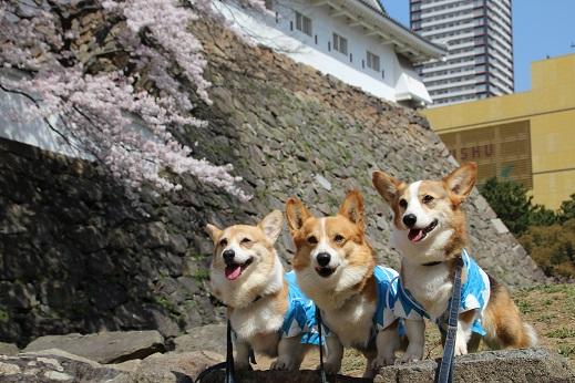 小倉城1 2015-3-30-1