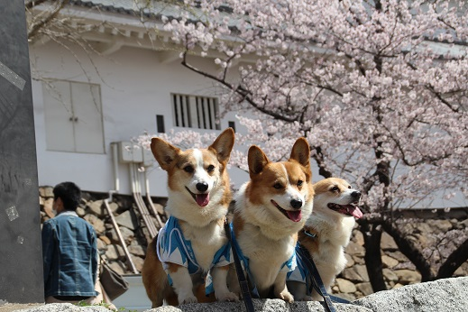 小倉城1 2015-3-30-4