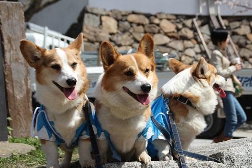 小倉城1 2015-3-30-5
