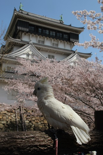 小倉城1 2015-3-30-8