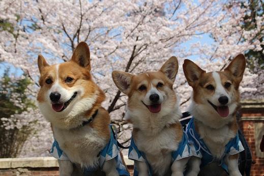 小倉城1 2015-3-30-10