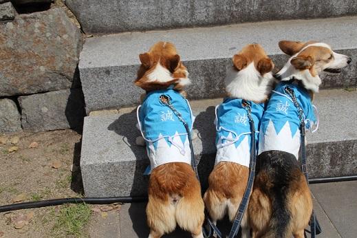 小倉城1 2015-3-30-11