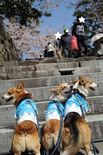 小倉城1 2015-3-30-12
