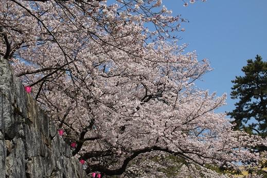 小倉城2 2015-3-30-1