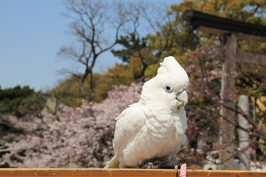 小倉城2 2015-3-30-4