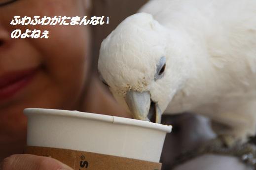 小倉城2 2015-3-30-6