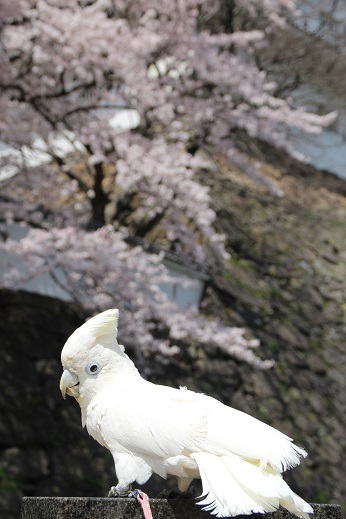 小倉城2 2015-3-30-9