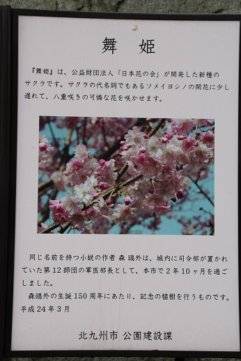 桜1 2015-4-5-9