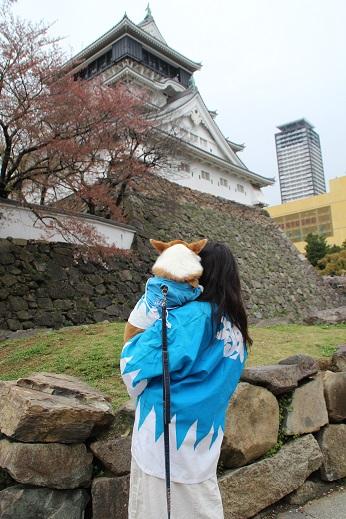 桜2 2015-4-5-3