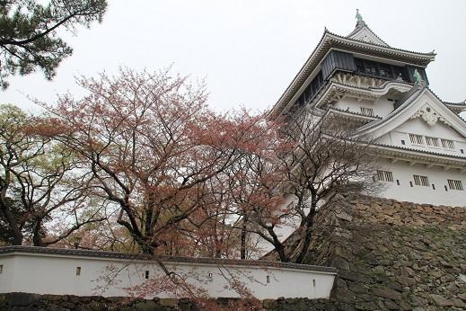 桜2 2015-4-5-4