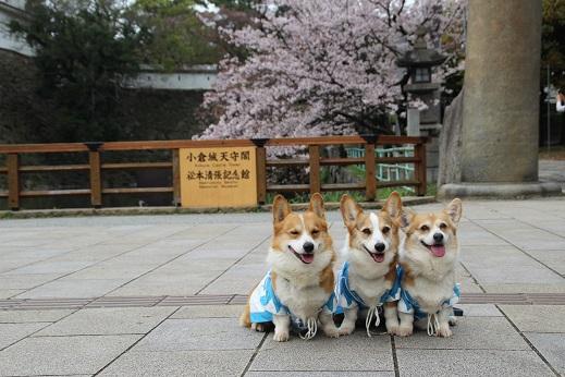桜2 2015-4-5-7