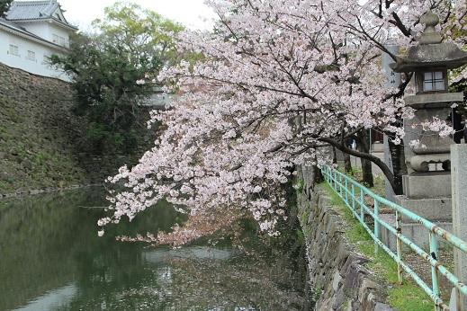 桜2 2015-4-5-10
