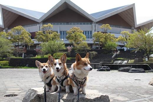 中央公園 2015-4-12-3