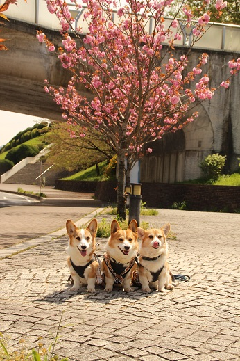 中央公園 2015-4-12-7