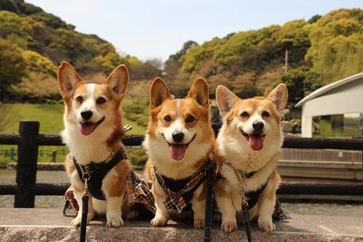 中央公園 2015-4-12-9