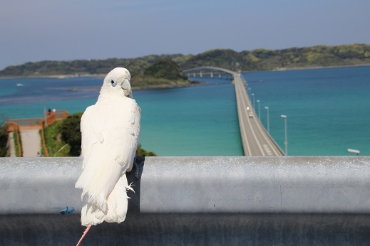 角島へ 2015-4-26-3